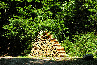 10-piled-forest/01_piled_forest_1473412612.jpg