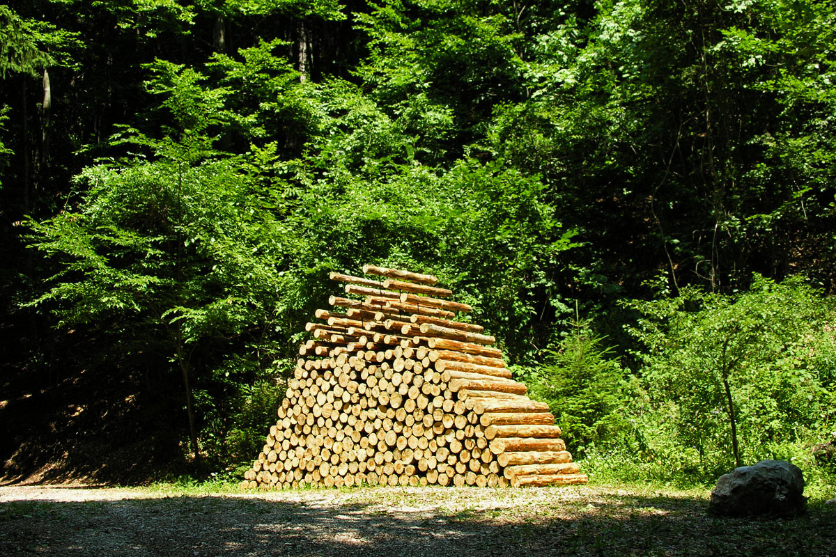 piled forest (2006)